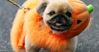 2020's Most Popular Pet Halloween Costumes